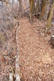 trail 4  5700