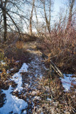 trail 26  5729
