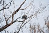 eagle 1 5792