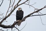 eagle 2  5794
