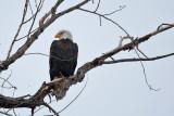 eagle 3  5795