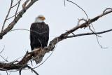 eagle 4  5796