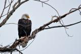 eagle 5  5797