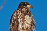 eagle 5826