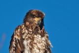 eagle 5828