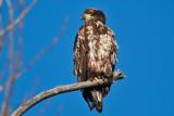 eagle 5831