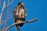 eagle 5837
