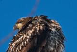 eagle 5839