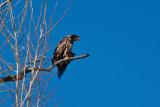 eagle 5843