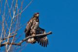 eagle 5845