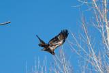 eagle 5848