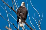 eagle 1  5871