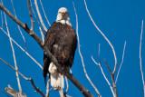 eagle 2  5872