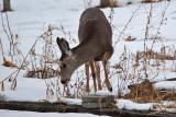 deer 8  5941.jpg