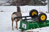 deer 13  5947.jpg
