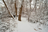 Snow 6278