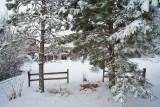 Snow 6282