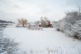 Snow 6283