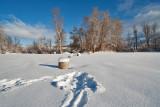 Snow   6340