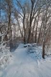 Snow   6345