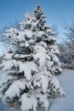 Snow   6350