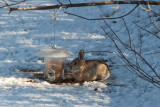 6363 Strange bird at the bird feeder