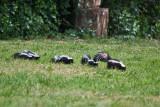 6841   skunk