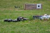 6844   skunk