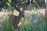 6995 deer
