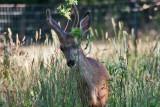6997 deer