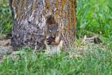 7253  Tough nut to crack..... black walnut
