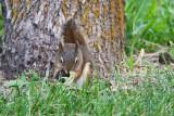 7255  squirrel