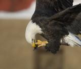 Iowa/Wisconsin Eagles