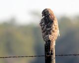 bird_watching_feb_2011