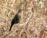 birdwatching_3_march_2011