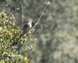 bird_watching_10_march_2011