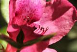 pbase 01 20110319_25.jpg