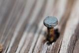 pbase 12 nail 20101013_65.jpg