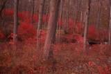 Fiery Landscape