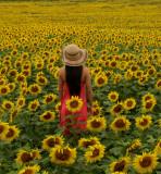 Lost in Sunflowers.jpg