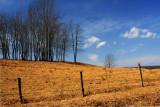 Pastureland.jpg