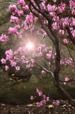Spring Tree.jpg