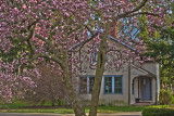 Cherry Trees Over Country House