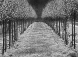 Infrared Photo Of A Tree Farm