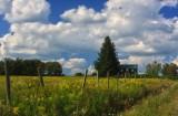 Upland Farm