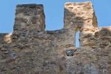 Castle Pigeon