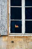 Window thing