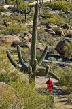 Multi-armed saguaro