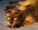 Me wild cat