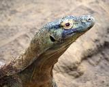 Komodo Dragon  P3039705.jpg